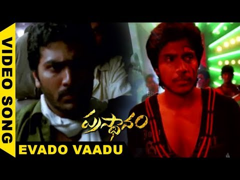 prasthanam Movie Song -  Evado vaadu Video Song - Sharvanand,Sai Kumar,Sundeep Kishan,Ruby Pariha