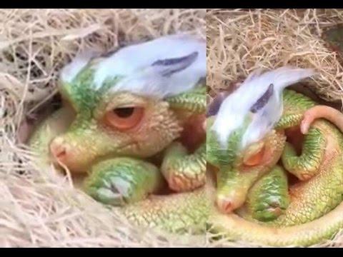Dragón Bebé Abre Sus Ojos Por Primera Vez En China 29 De Abril De