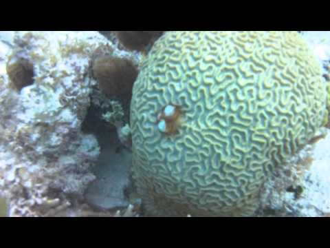 CCSU Biology - Belize Marine Ecocsystems Course