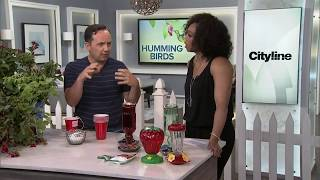 4 ways to attract hummingbirds to your garden
