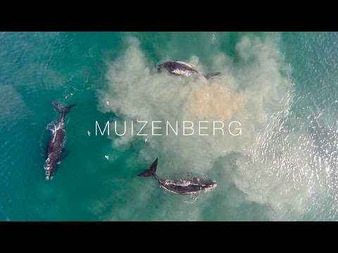 Whales on Muizenberg - Cape Town