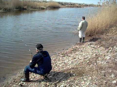 тимирязевские пруды платная рыбалка форум