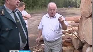 В Борисоглебском районе уже полгода орудуют черные лесорубы