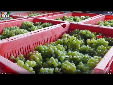 How to Make Wine from Grapes | MAKING OF WINE | ND WINES