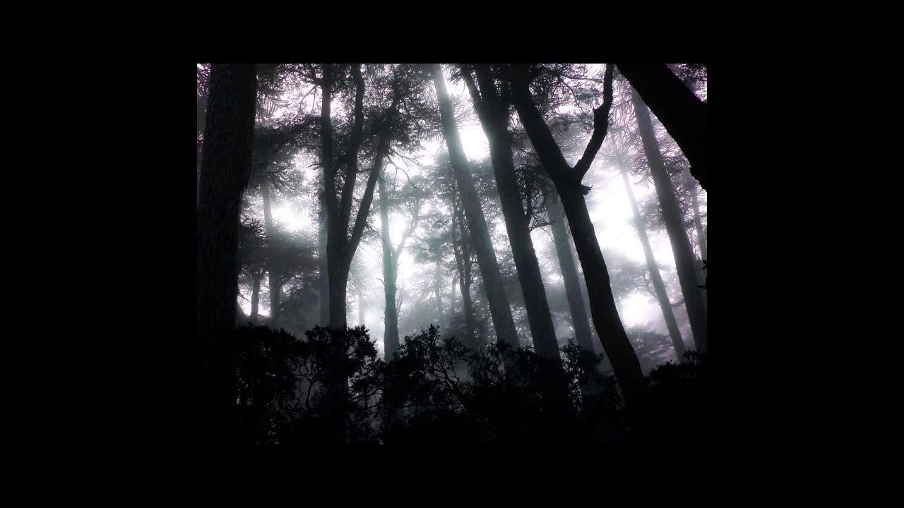 Coalescer - Trunk Marks