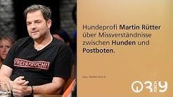 Martin Rütter über Missverständnisse zwischen Mensch und Hund // 3nach9