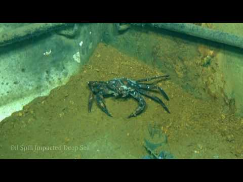 Disappearing Deep-Sea Diversity at the Deepwater Horizon Site