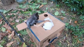 Kittens playing ( Too much cuteness )