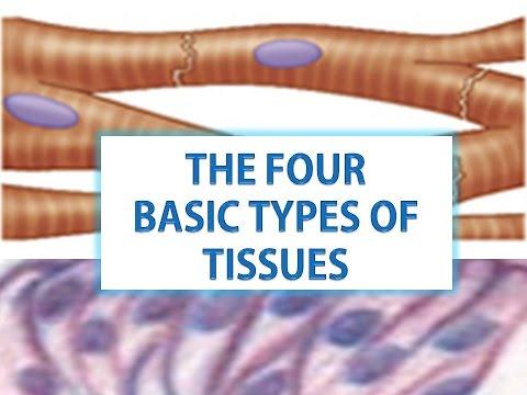 four main types of tissue