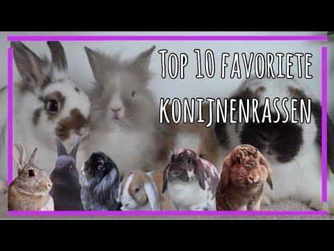 mijn top 5 favoriete konijnenrassen || konijnensquad ||
