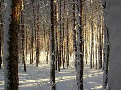 Утро в сосновом лесу картон Худ Шишкин ИИ