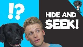 Dog Hide n Seek with My Borador Puppy