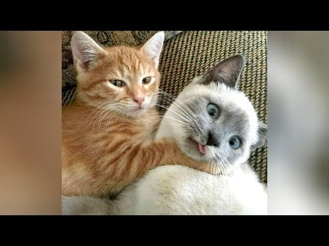 Ultra FUNNY CATS & KITTENS - Try not to CRY WITH LAUGHTER!