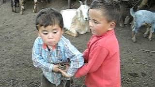 Sacando leche en el Infiernillo  (guanguali)