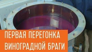 Первая перегонка виноградной браги на самогонном аппарате Профи