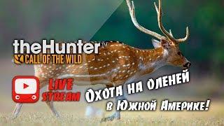 theHunter Call of the Wild - Охота на оленей в Южной Америке | DLC PARQUE FERNANDO