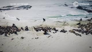 видео Берингово море