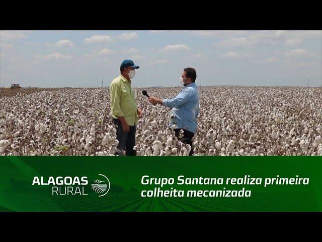 Grupo Santana realiza primeira colheita mecanizada de algodão em área comercial