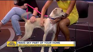 Rescues in Action June 24 | Sky is ready to join your family