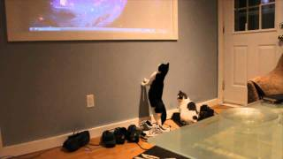 retarded cats chase mouse cursor