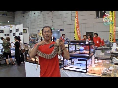 Reptil.TV - Folge 33 - Asien 2011