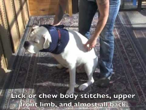 How To Make A Homemade E Collar For Dog