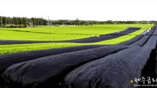 green tea farm 02