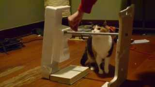 Raising the bar: Cat training!