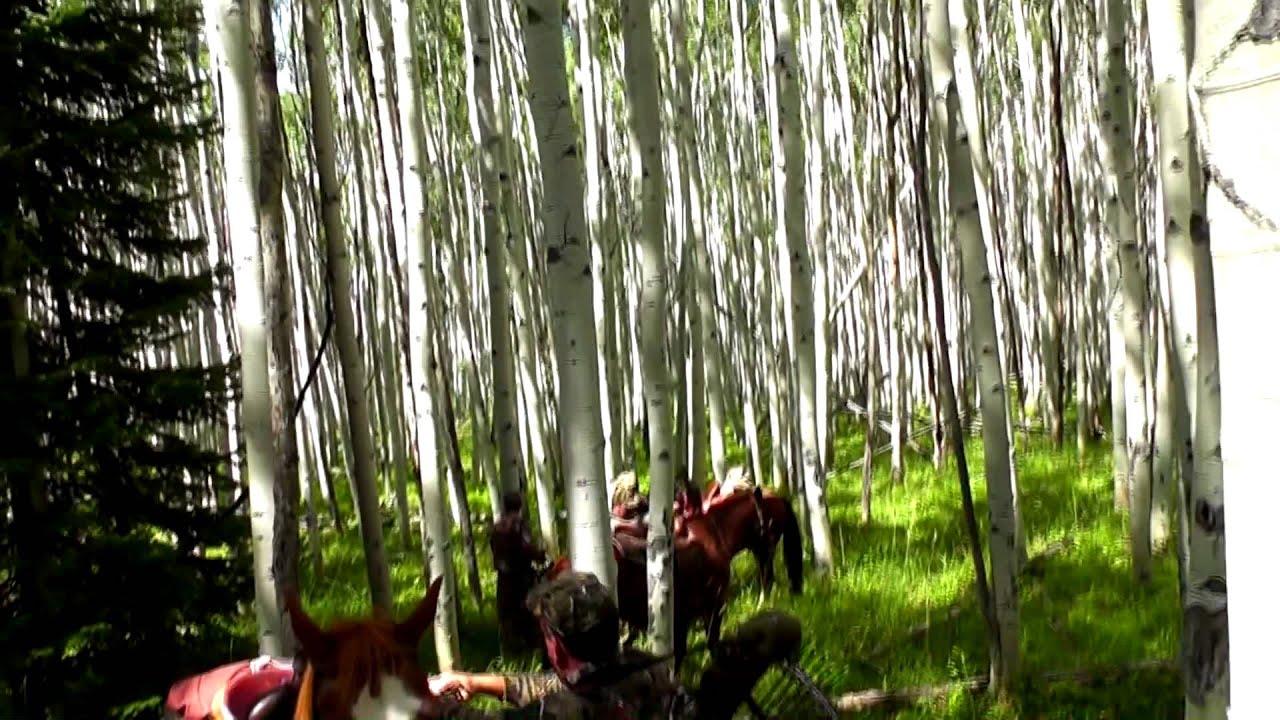 Horseback Riding in Colorado   2011 Elk Hunting Trip    TrophyQuestOutpost com