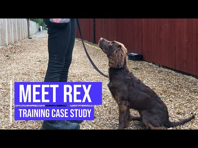 Recall and obedience training for a Working Spaniel
