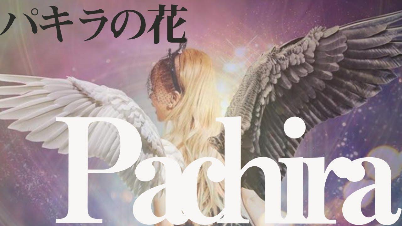 パキラの花  / SACHI TAKEKOSHI <ハッピーちゃん>