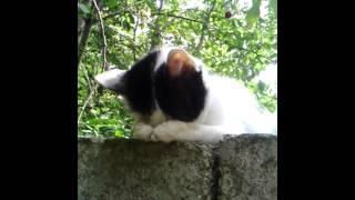 Мега сон кота!
