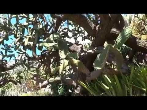 Exotic Garden of Monaco