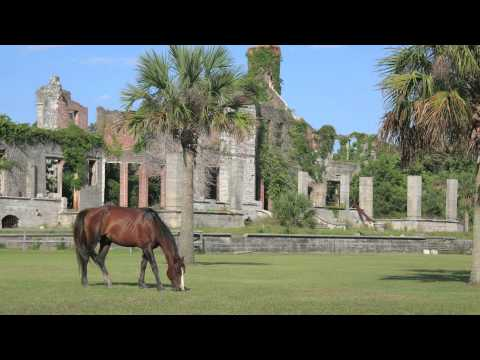 Cumberland Island | The Coolest Stuff on the Planet