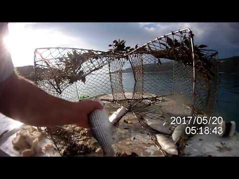 fish in fish trap, pesca con nassa, ribolov vršom - odličan ulov