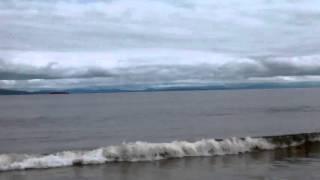 Dolphins at Nairn Beach Scotland