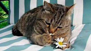 Смешное видео про животных. Приколы с животными. Смешные кошки Часть 3