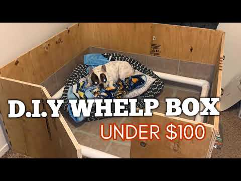 HOW TO MAKE DOG WHELPING BOX UNDER $100   Step By Step!   French Bulldog Breeders