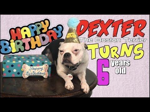 Boston Terrier Dog's 6th Birthday !