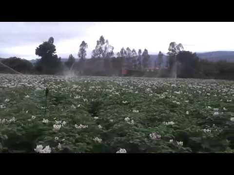 Sistema de Riego por Aspersión NaanDanJain para Papa en Mairana (Bolivia) thumbnail