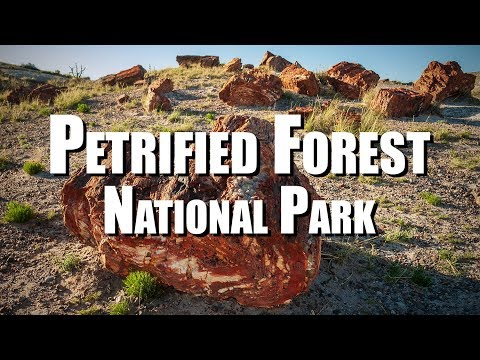 Petrified Forest National Park (Arizona)