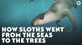How Sloths Went From the Seas to the Trees
