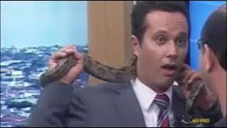 TV Record criação de serpentes