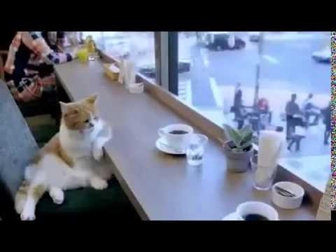 Funny Cat Drinking Meme : Sad cat drink coffee youtube