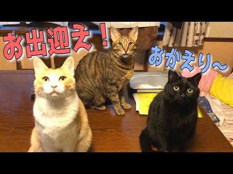 1日ぶりに帰宅したら猫たちが大集合でお出迎えしてくれました!