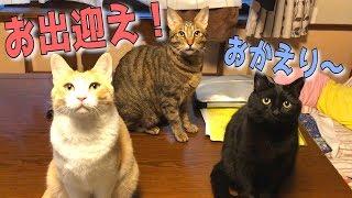 1日ぶりに帰宅したら猫たちが大集合でお出迎えしてくれました! thumbnail