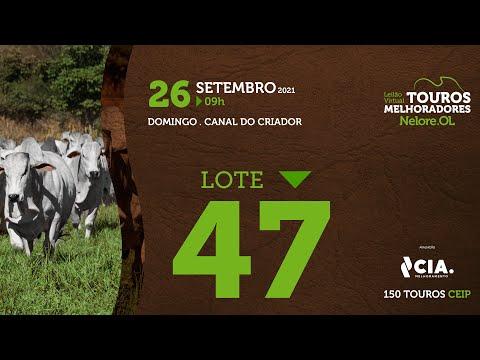 LOTE 47 - LEILÃO VIRTUAL DE TOUROS 2021 NELORE OL - CEIP
