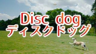 ウィペット、サルーキ、大好きな犬に囲まれて楽しい時間でした(*^▽^*) ...