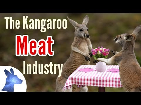 Crash Mornings - School Chef Loses For Serving Kangaroo Meat In The Chili