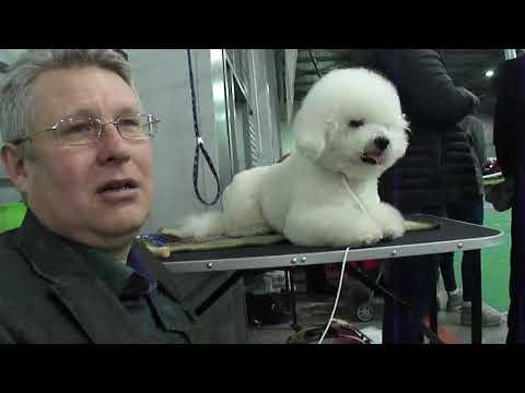 Выставка собак  Кубок ЭСПРИ 2018